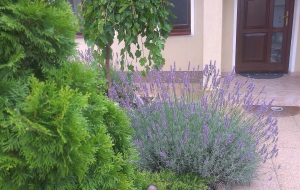 Amenajare grup plante perene, dupa cativa ani