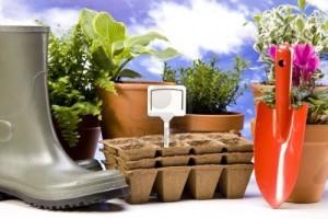 intretinere plantelor