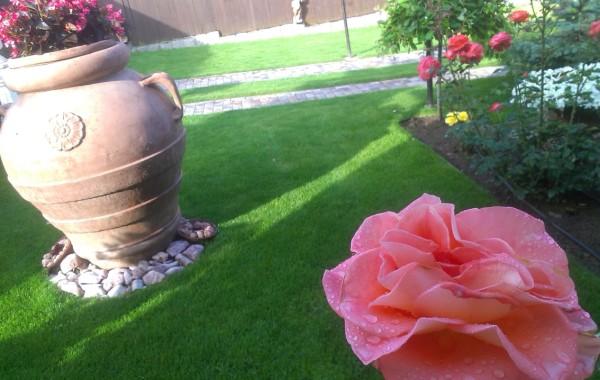 Intretinere gradina cu multe plante